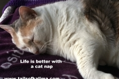 Kali-Ma the Cat Photo With Quote