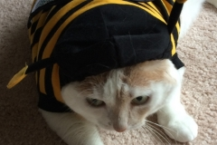 Kali-Ma Bumblebee Kitty