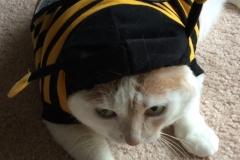 Kali-Ma Bumblebee Kitty
