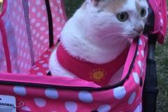 Kali-Ma In Her Stroller
