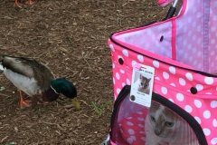 Kali-Ma And The Ducks In The Park