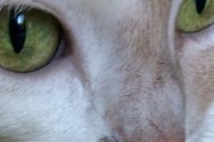 Kali-Ma-Green-Eyed-Beauty-2