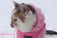 My Snow Loving-Cat