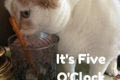 "Kali-Ma the Cat ""It's Five OClock Somewhere!"""