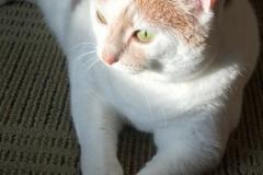 Kali-Ma-The-Cat-On-Sunday-Morning