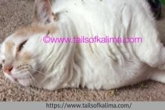 Kali-Ma in Catnip Heaven