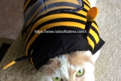 Kali-Ma the Bumblebee