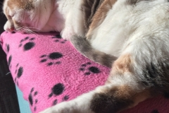 Kali-Ma the Cat Sleeping