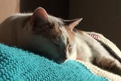 Kali-Ma sleeping