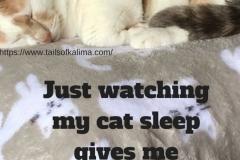 Watching My Cat Sleep