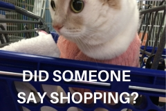 Kali-Ma the Cat Shopping