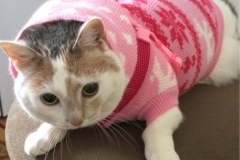 Kali-Ma the Cat getting ready to go for a walk in the snow
