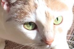 Kali-Ma the Cat