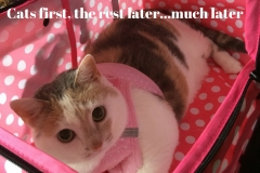 Kali-Ma the Cat in her Therapy Stroller